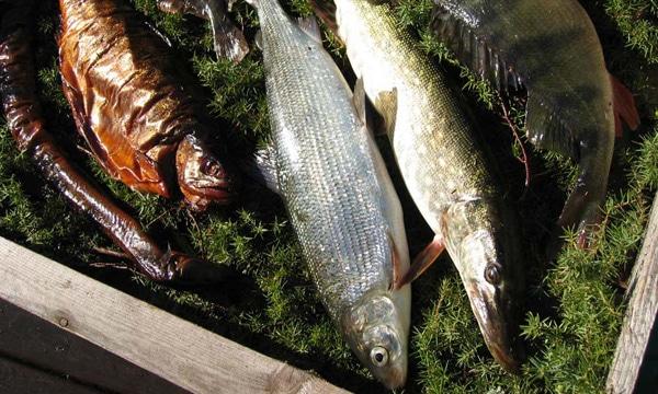 banner_fiskforsaljning